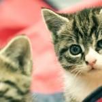 Katter bør skytes, de er en fare for vår eksistens