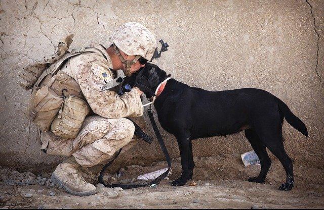 Menneskeheten fortjener ikke hunder ...