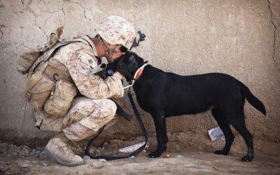 Menneskeheten fortjener ikke hunder …
